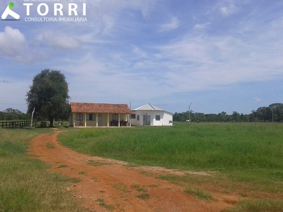 Fazenda No Pantanal, Mt - Fa00055 - 68096506
