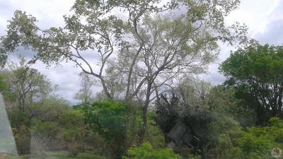 Fazenda Com 2 Dormitório(s) Localizado(a) No Bairro Br 116 Norte Em Feira De Santana / Feira De Santana - 2942