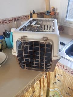 Kenel Tipo Jaula Para Perros Y Gatos