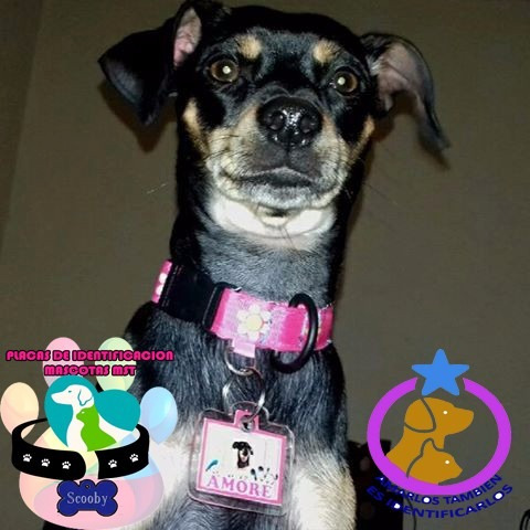Placas De Identificacion Mascotas