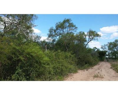 Santiago Del Estero: Pinto: Campo En Venta De 67 Has De Monte Arbolado, Argentina