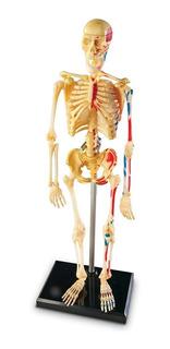 Anatomía Cuerpo Humano Esqueleto 41 Piezas
