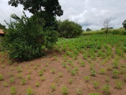 Fazenda A Venda Em Duere (dupla Aptidão) - 1101