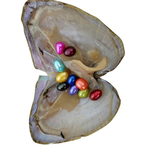 10 Perlas De Agua Dulce En Una Almeja Cultivada 10 Pzas.