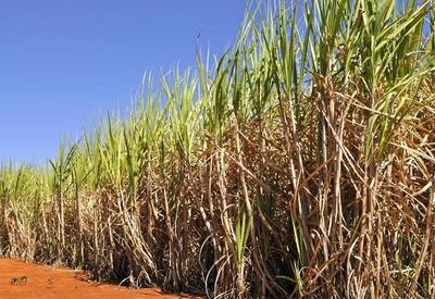 Fazenda De Cana Região Olímpia, 80 Alqueires - Fa0030