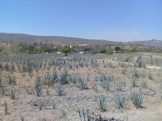 Rancho 70 Hectareas Venta Juchitlan, Jalisco