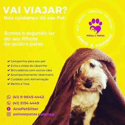 Creche E Hospedagem Para Cães De Pequeno Porte