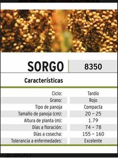 Semilla De Sorgo De Grano Croplan 8350
