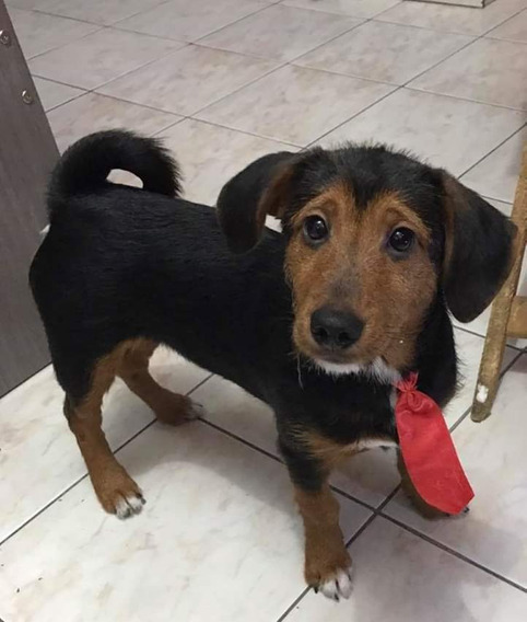Doação Cachorro Srd Sem Raça Definida