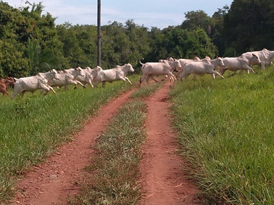 Fazenda A Venda Em Terenos - Ms (pecuária) - 1091