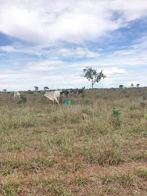 Fazenda Para Boi - 1946 Ha - Região Paracatu (mg) - Codigo: Fa0014 - Fa0014