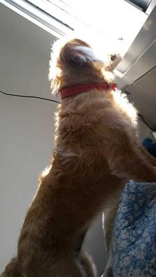 Sessão De Adestramento De Cães