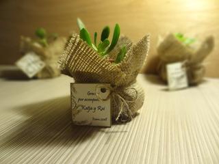 Recuerdos Cactus Encintados Plantas Para Matrimonios Regalos