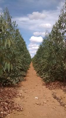 Fazenda Em Montes Claros - Mg Dupla Aptidão - 547