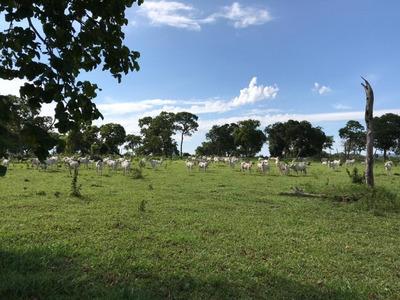 Fazenda A Venda Em Rio Negro - Ms (pecuária) - 1018
