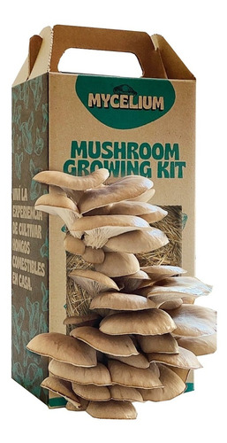 Kit De Autocultivo De Hongos Girgola Gris Mycelium
