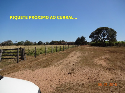 Fazenda Em Gurupi - To, P/ Pecuária - 236