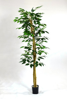 Arbol Ficus Plantas Artificiales . Regalosdeco