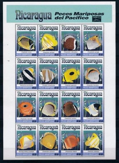 Dams Nicarágua Peixe Borboleta Fauna Marinha Aquário