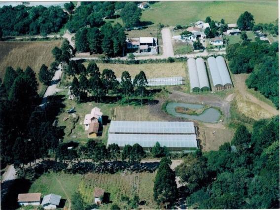 Chácara Residencial À Venda, Planta Laranjeiras, Piraquara. - Ch0012 - 32836441