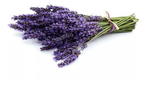 Semillas Lavanda X 0.5 Gramos Planta Medicinal Y Decorativa