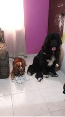 Guarderia De Mascotas.