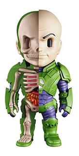 Lex Luthor Xxray By Jason Freeny Dc Comics Mighty Jaxx