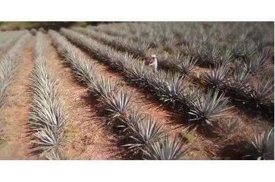 Venta De Rancho Tequilero En Zapopan Jalisco
