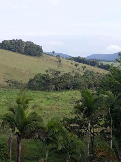 Ref.: 7534 - Fazenda Em Jacupiranga Para Venda - V7534