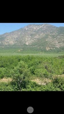 Campo En Venta 75 Hectáreas Coltauco - Idahue