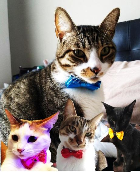 Collar Mascota Con Cascabel Perro Gato Conejo Uron Moño