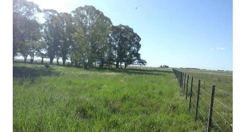 Sc576 Campos En Ranchos, Prov De Bs As