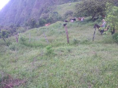 Venta De Finca Ganadera San Pedro (valle)
