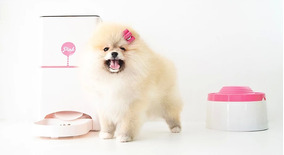 Comedouro Playpet Pink + Puripet 2l Rosa