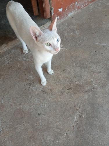 Vendo Gato Ojos De Diamantes Mercado Libre