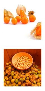 30 Sementes De Physalis Peruviana - Fruta Deliciosa!