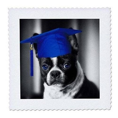 3drose Qs_203384_1 Lindo Perro Toro Francés Con Un Sombrero