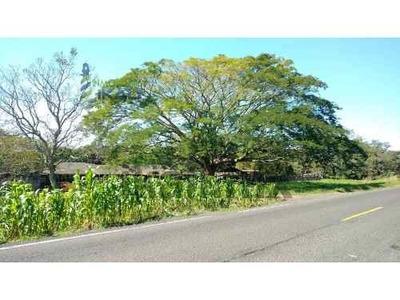 Vendo Rancho Ganadero 223 Hectáreas Temapache Veracruz, Ubicadas En La Carretera A Tampico En El Km 40 Desde Tuxpan Veracruz, 4 Km. Antes De Potrero Del Llano Veracruz, Tiene 1 Kilómetro De Frente A