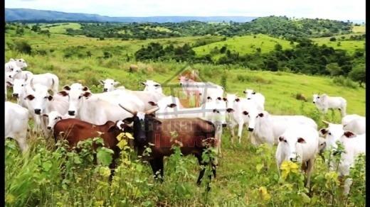Fazenda Rural À Venda, Zona Rural, Nova Brasilândia - Mt. Fa0165. - Fa0165