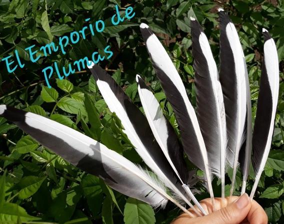 Plumas Blancas Y Negras Brillantes Naturales Pack X 50