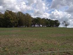 Campo En Venta En Paysandú