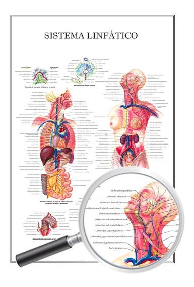 Poster Enfermagem Universitário Sistema Linfático 60x90 Cm