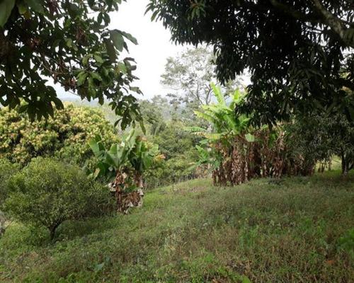 Chácara A Venda Em Mairiporã-sp - 0212 - 34968772