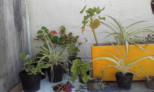 Plantas Nuevas De Diferentes Especies A Eleccion Por Lote!!!