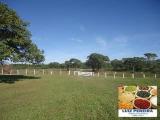 Fazenda A Venda Em Sandolândia - To De 22.800 Hectares (pecuária) - 213