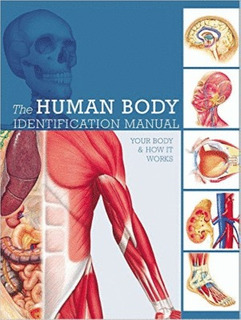 Human Body Identification Manual: Your Body & How It Works,