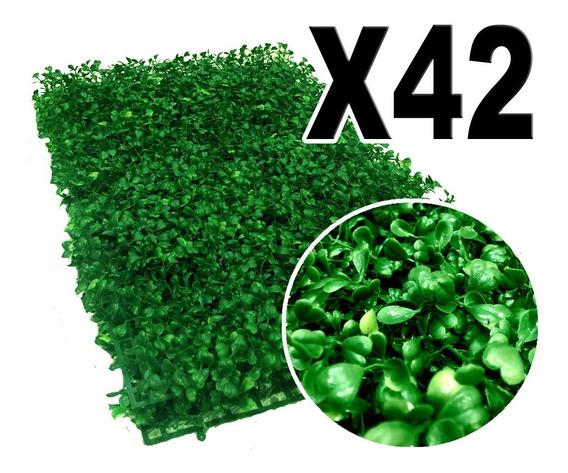 10 M2 De Follaje Muro Verde P6 Arrayan Rs42