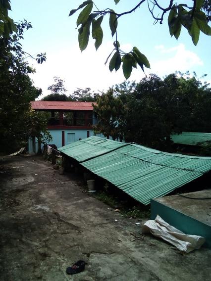 Finca De 453 Tareas De Cacao En Municipio De Castillo