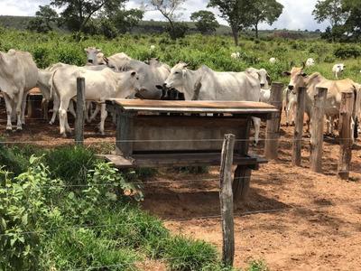 Fazenda Rural À Venda Rondonópolis -mt - Fa0204