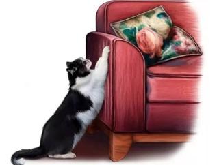 Cintas Anti Scratch El Gato Araña Los Muebles? Fabricantes